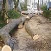 White Oak March 26 200436