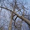 White Oak March 26 20047