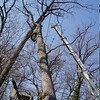 White Oak March 26 200423