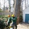 White Oak March 26 200433