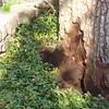 White Oak March 26 200425