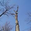 White Oak March 26 200424