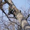 White Oak March 26 200420