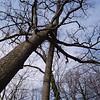 White Oak March 26 20045