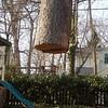 White Oak March 26 200430