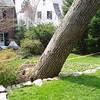 White Oak March 26 20043