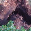 White Oak March 26 200426