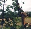 Shamokin Tornado in 1998.