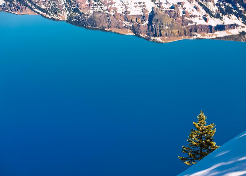 Tree, Crater Lake NP
