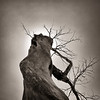 Screaming Woman Tree, Badlands, South Dakota