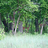 Deer in Maplewood State Park