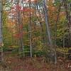 Color along Mill Creek Road.  10/27/2017