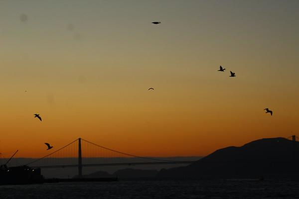 Birds in passing
