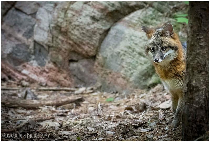 Foxy peak