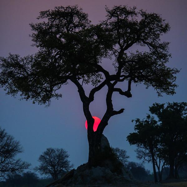 Sunset, Mana Pools NP, Zimbabwe
