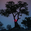 Sunset, Mana Pools NP, Zimbabwe