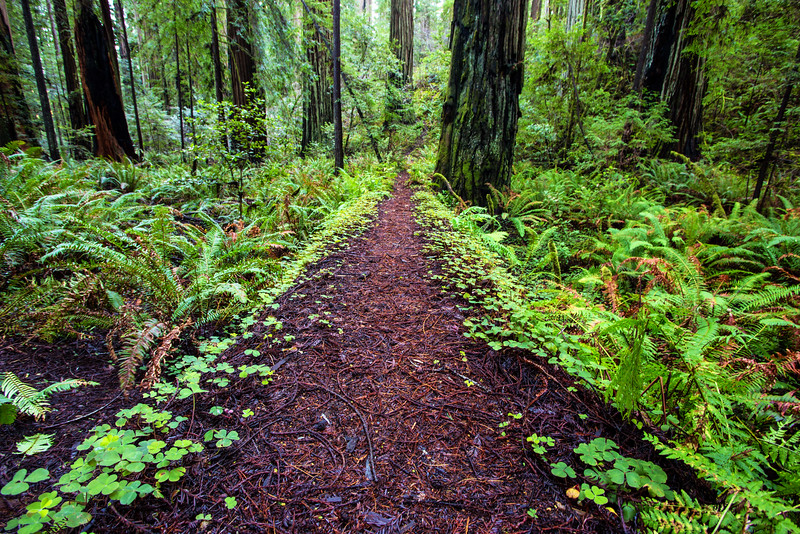 Natural Path, Redwoods NP