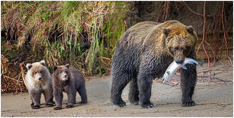 When's dinner mom?