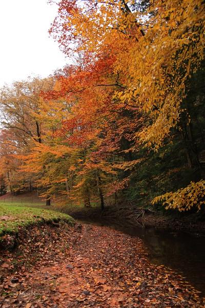 Beautiful fall colors.  11/1/2018