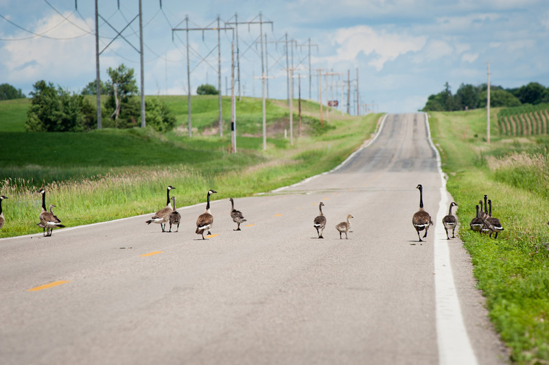 Heavy traffic on my evening commute through Ottertail County
