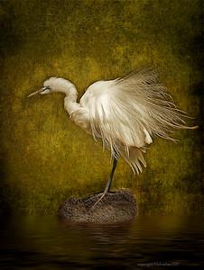 Great Egret Final