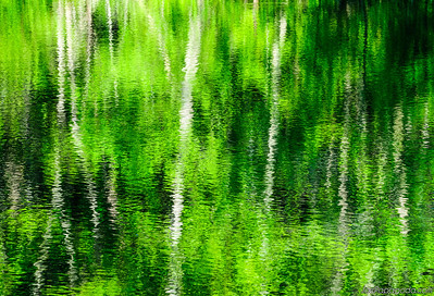 Water reflections