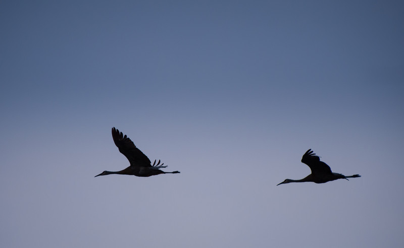 Cranes flying near Star lake