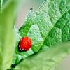 A macro image of a ladybug.