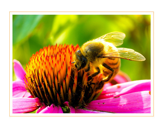 Bee large