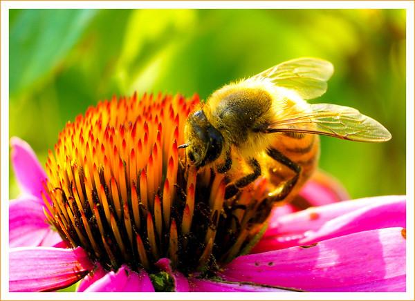 Beelightful2