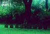 An unnamed family plot in Mount Auburn Cemetery, Cambridge, MA