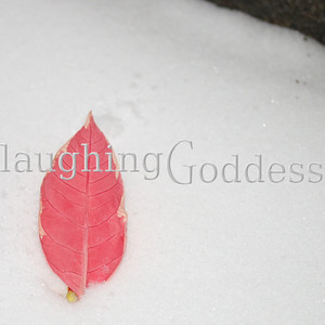 Title: Phoenix  So titled because the red poinsettia leaf laying in the snow brings to mind Fawks, Dumbledore's Phoenix.