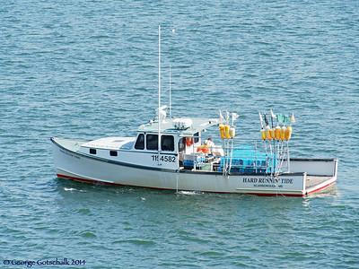 Portland Lobster fishing