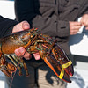 We went lobster fishing in Portland and caught 5 legal ones.  The weather was beautiful so it was a lot of fun.