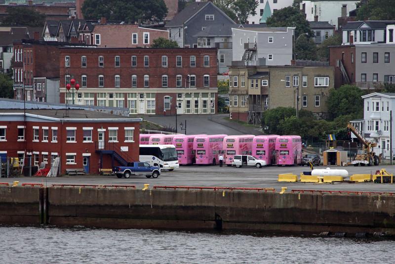 Pink Tour buses in Saint John,New Brunswick.