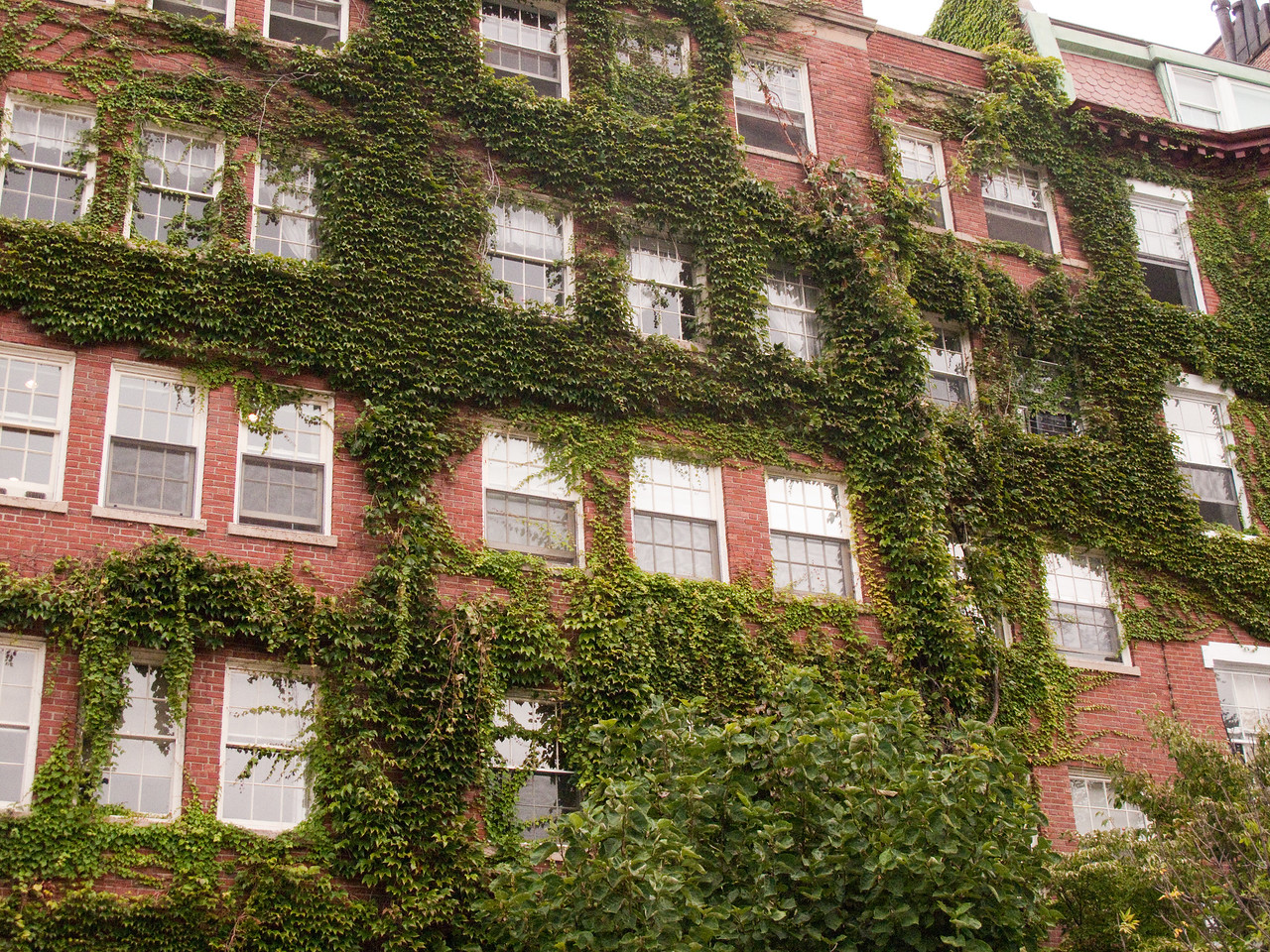 Ivy attack in Boston