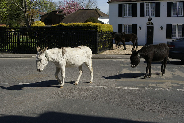 New Forest 2013
