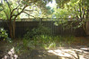 Looking around the back yard - before. Kept  Pittosprum (left ) and Laurel (right).