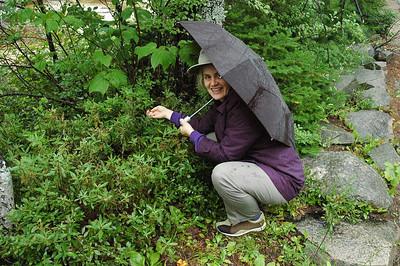 Jennifer picking wild blueberries