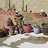 Gorgeous day in the Valley of the Sun, spent much of it playing and arranging my cactus.  :)