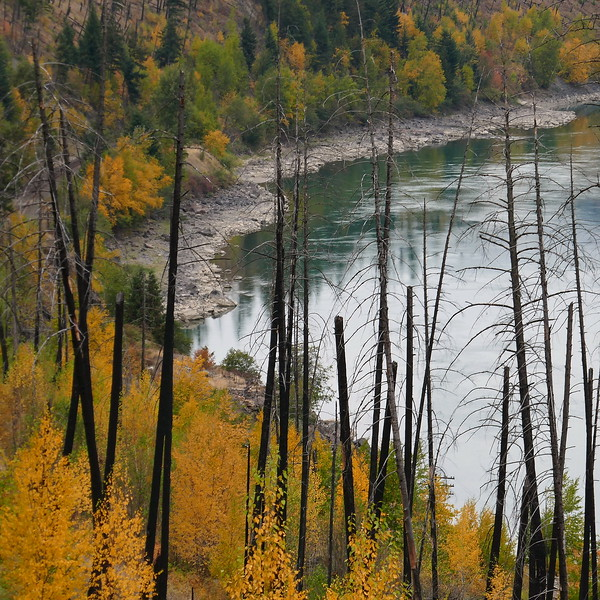 Burn Zone on the North Thompson River near Barriere BC
