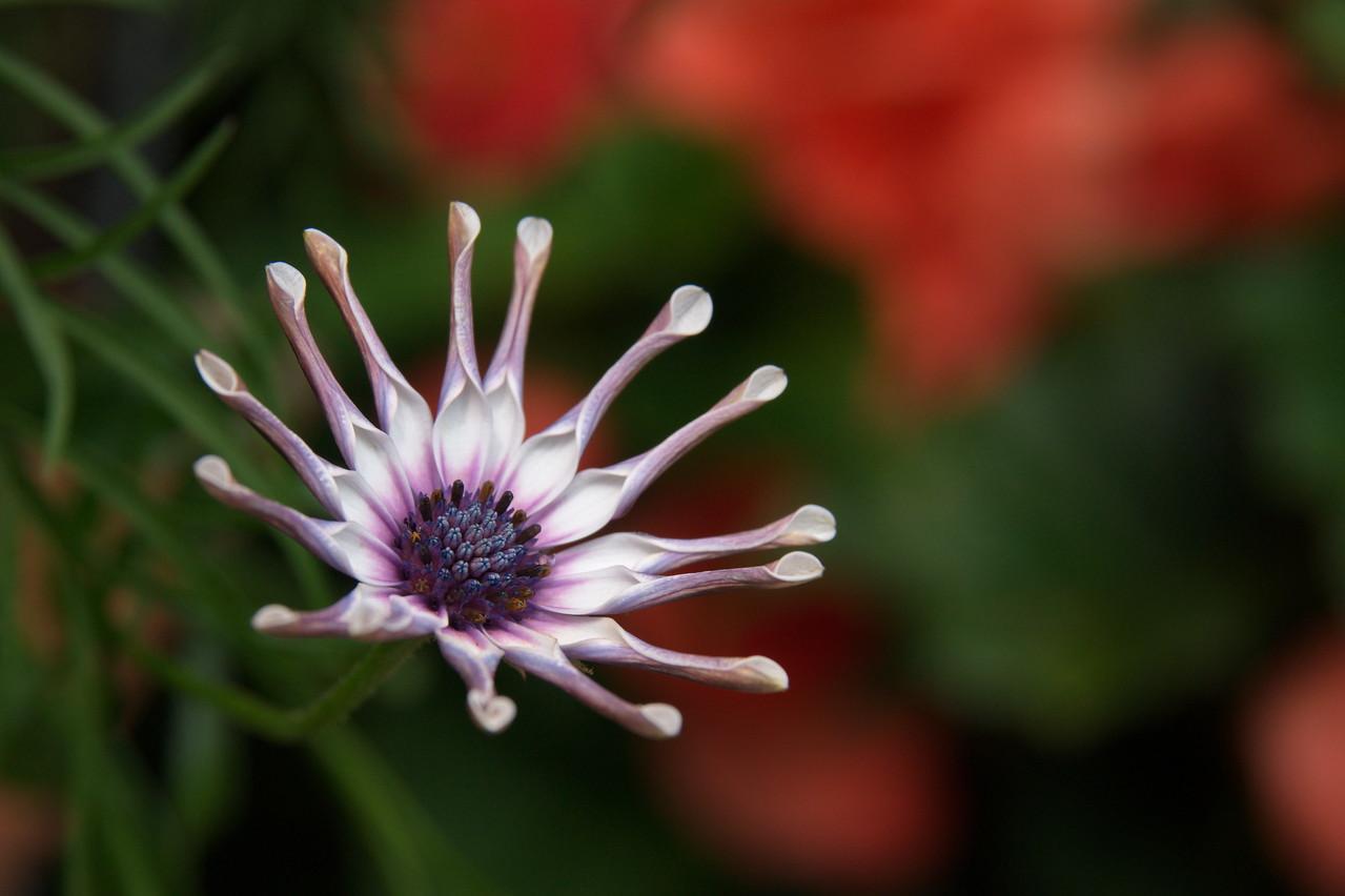Unknown flower from Suzanne's garden in 2010