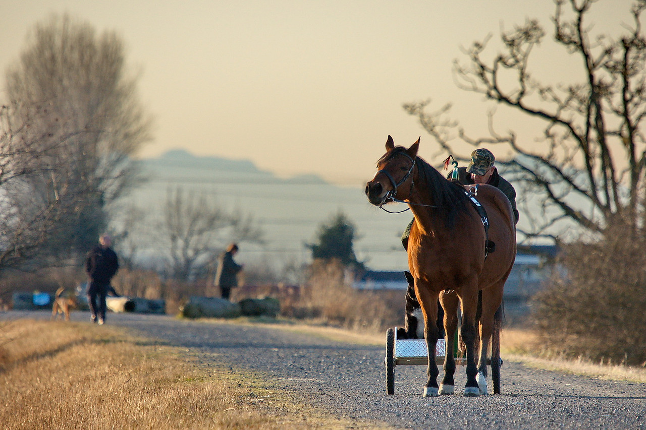 Horse with its dog and man, at Boundary Bay, Delta, BC