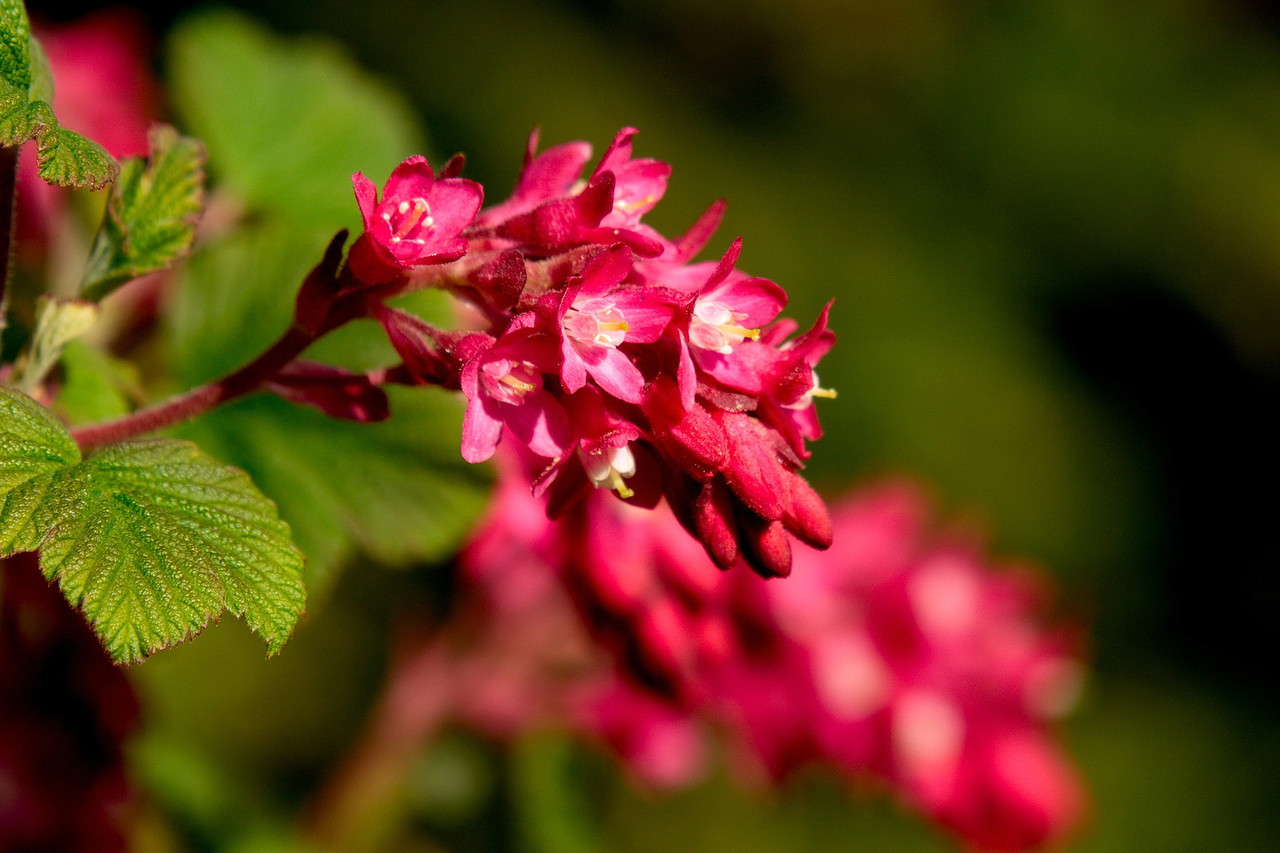 Unknown flower at Richmond Nature Park