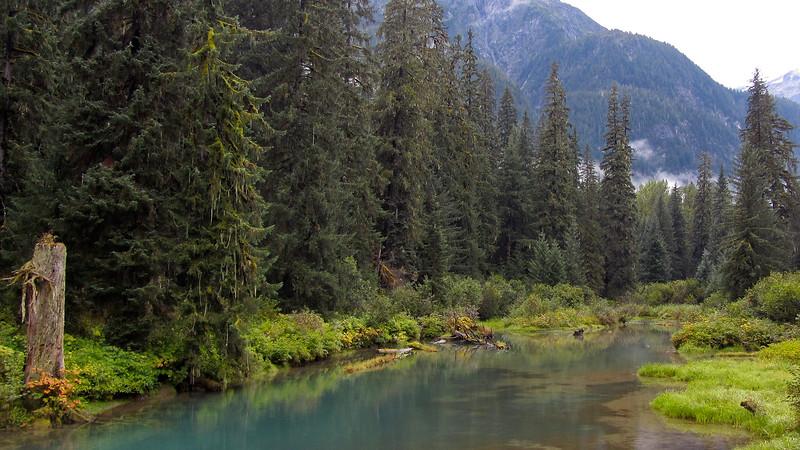 The Bear Pond