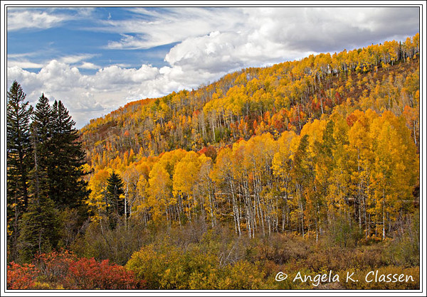 Vibrant aspens on the Buffalo Pass Road near Steamboat Springs