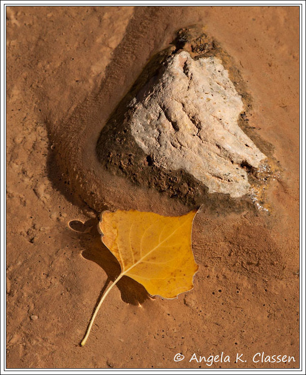 Cottonwood leaf in creek, Dominguez Canyon, Colorado