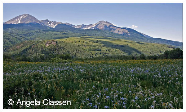 Rocky Mountain iris and arrowleaf balsalm root blanket a meadow in the La Sal Mountains outside Moab, Utah