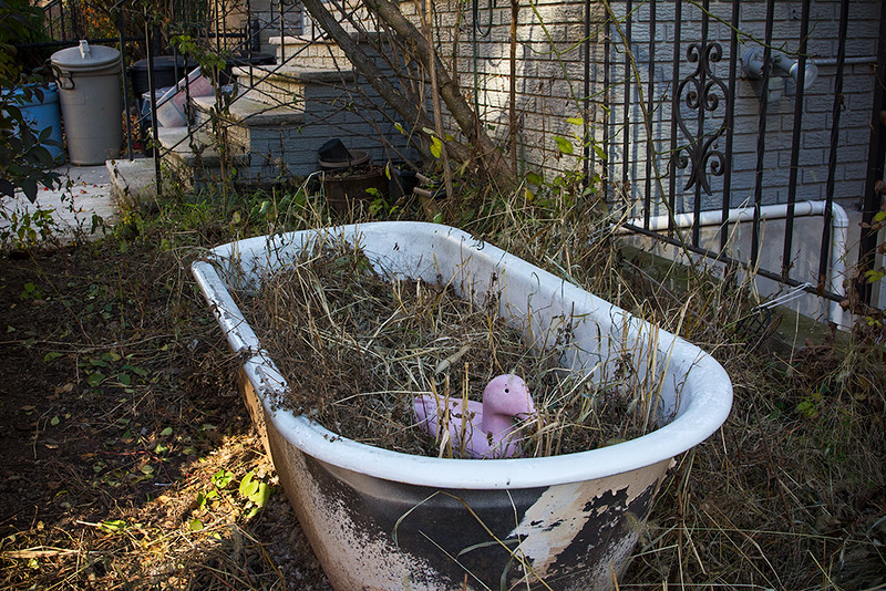 Duck in a Tub, Jersey City<br /> ©2017 Peter Aldrich
