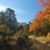 MicKittrick Canyon Autumn